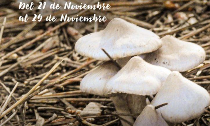 San Roque celebra una Ruta Gastronómica de la Seta