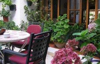 El chivo ecológico del restaurante Casa Las Piedras