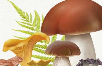 Las Jornadas Micológicas del Parque Natural Los Alcornocales en Jimena, del 22 al 24 de noviembre