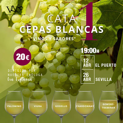 cata-cepas_blancas1_ig_opt