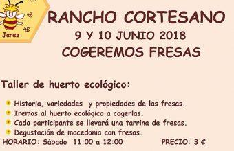 8 y 9 de junio. Jerez. Recolección de fresas y apicultura en Rancho Cortesano