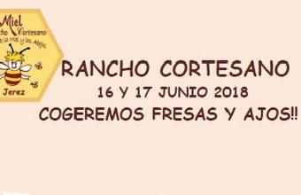 16 y 17 de junio. Jerez. Recolección de fresas y ajos