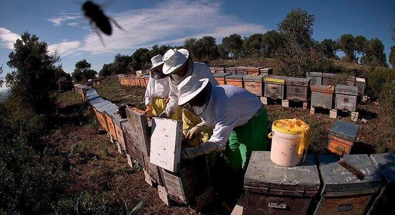 15 y 16 de septiembre. Jerez. Taller de apicultura y recolección de almendras.