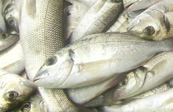 Temporada del pescado de estero en la cervecería La Marea de Cádiz
