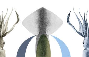 Del 26 al 29 de octubre. Conil. IV Jornadas del calamar de potera en la Venta Melchor