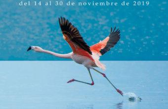 Puerto Real celebra su Quincena del estero