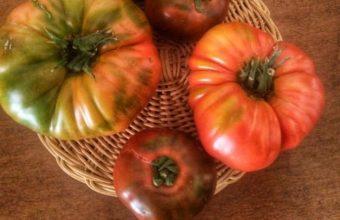 Cata de tomates en Sancha Pérez