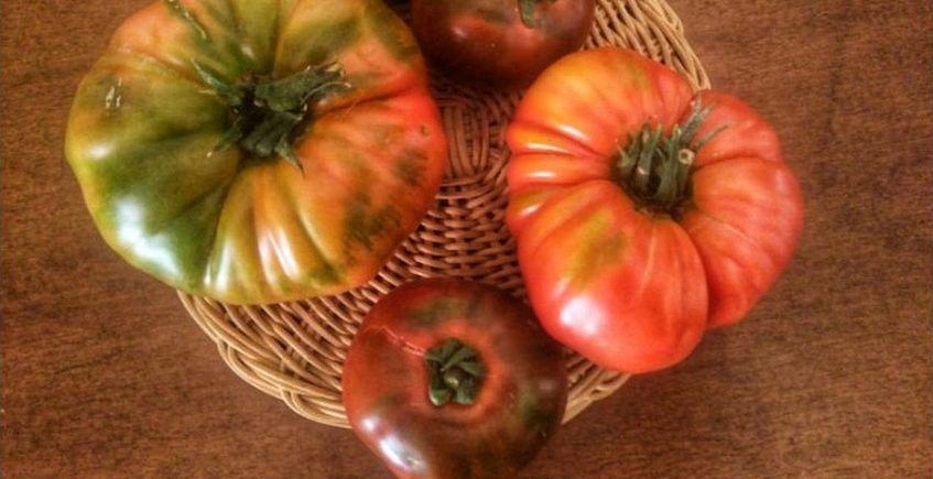 Cata taller de tomates ecológicos en Sancha Pérez el 20 de julio