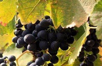 26 de abril. La Línea. Cata de los vinos de bodegas Montebaco.