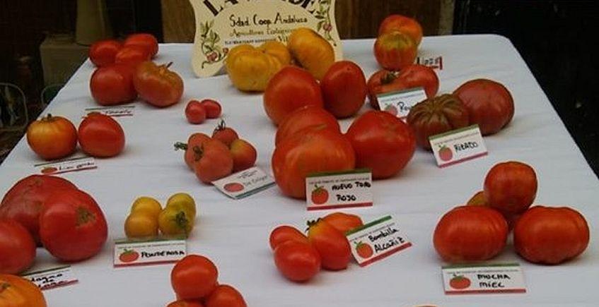 Cata de tomates en La Huerta Ecotienda de Cádiz