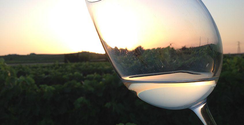 El restaurante del Jerez, en medio de la viña de Jerez