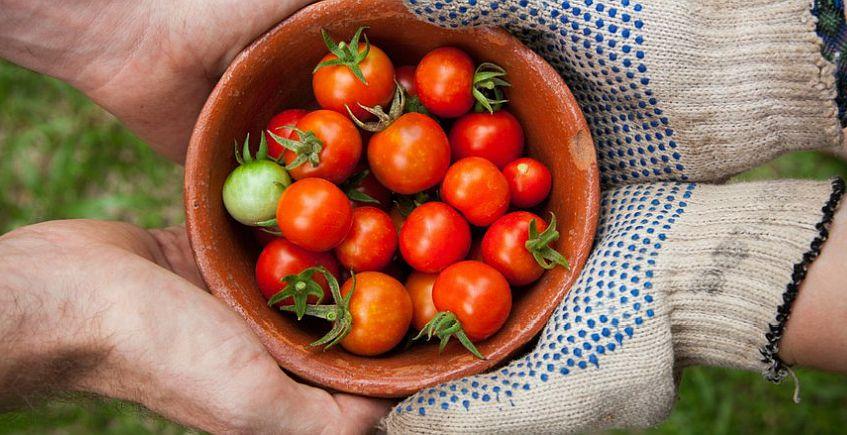 26 de junio. Cádiz. Encuentro con productores de verduras y embutidos veganos y eco