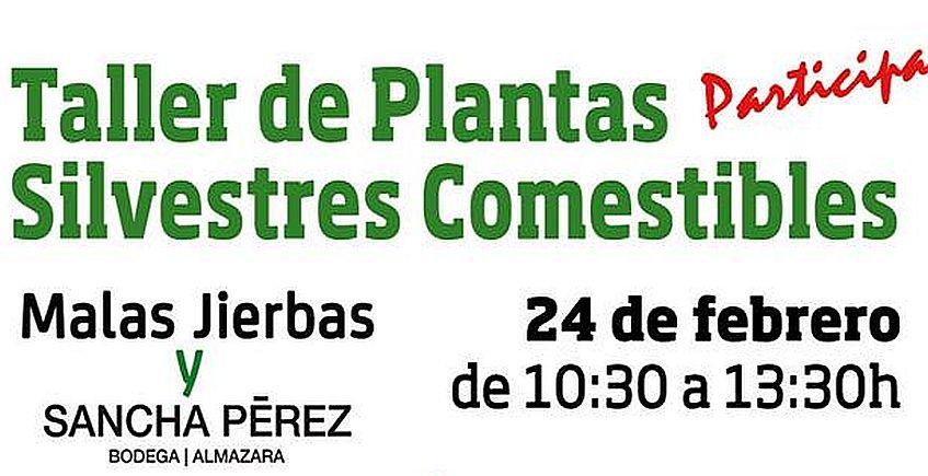 24 de febrero. Conil. Taller de plantas silvestres comestibles en Sancha Pérez