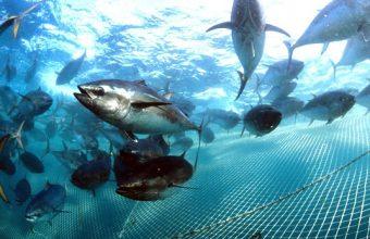 Jornadas gastronómicas dedicadas al atún rojo en Popeye de Chiclana desde el 17 de mayo