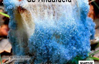 16 y 17 de marzo. Benalup-Casas Viejas. VII Quedada de asociaciones micológicas de Andalucía