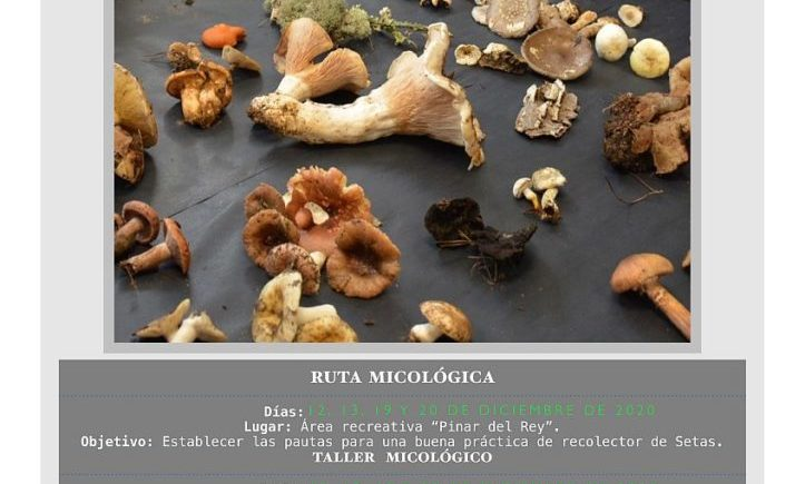 Rutas y talleres micológicos en San Roque