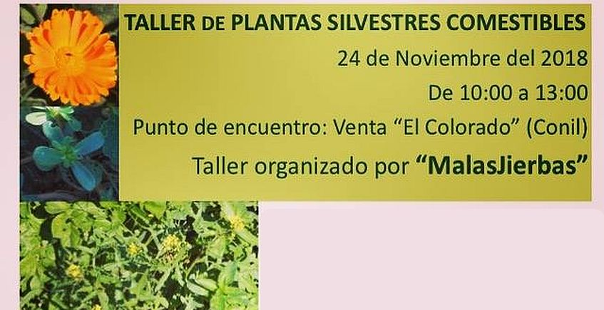 24 de noviembre. Conil. Taller de plantas silvestres comestibles
