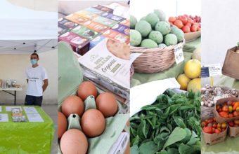 Mercado de productores locales en Los Toruños