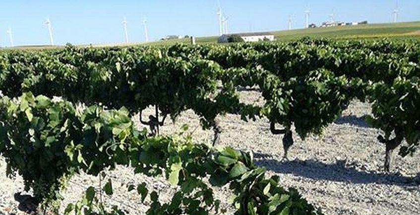 26 de octubre. Cádiz. Conferencia '5000 años de vino, un gaditano tuvo algo que ver'
