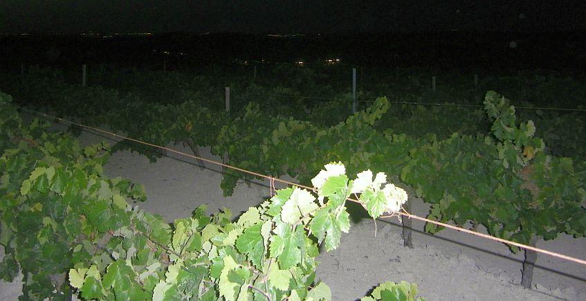 1 de julio. Jerez. Mojito de oloroso y visita nocturna a viñedos