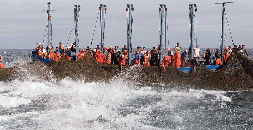 El Campero y Gadira mostrarán en la Facultad de Gastronomía del País vasco el potencial del sector del  atún rojo en la provincia
