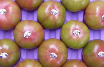 Los tomates, uno de los productos característicos de la huerta de Conil. Foto: Cosasdecome