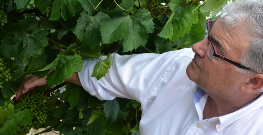 Premios para vinos de Francisco Yuste