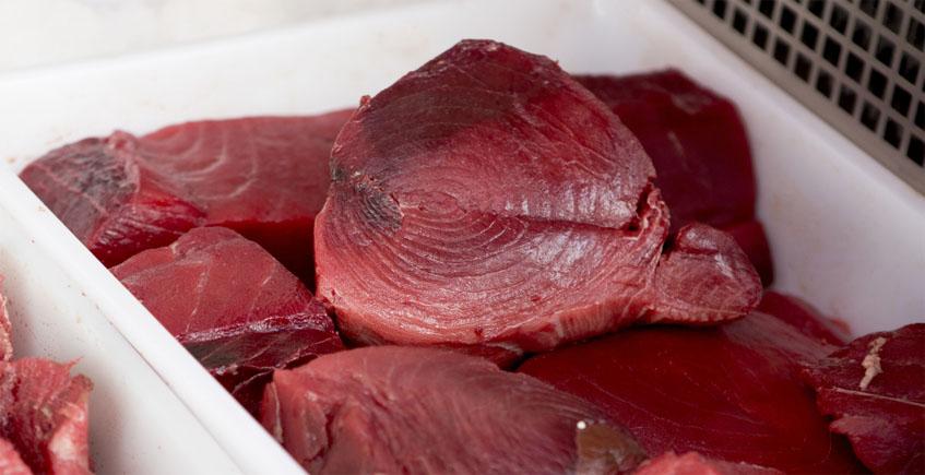 La empresa almadrabera Gadira aclara que la intoxicación con atún en Almeria es de otra especie diferente al rojo de almadraba