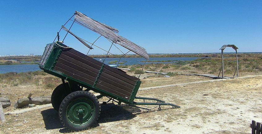 16 al 29 de agosto. Chiclana. Despesque, cata de productos ecológicos, cata y extracción de sal en Salinas de Chiclana.