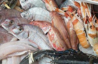pescados-foto-a-mar