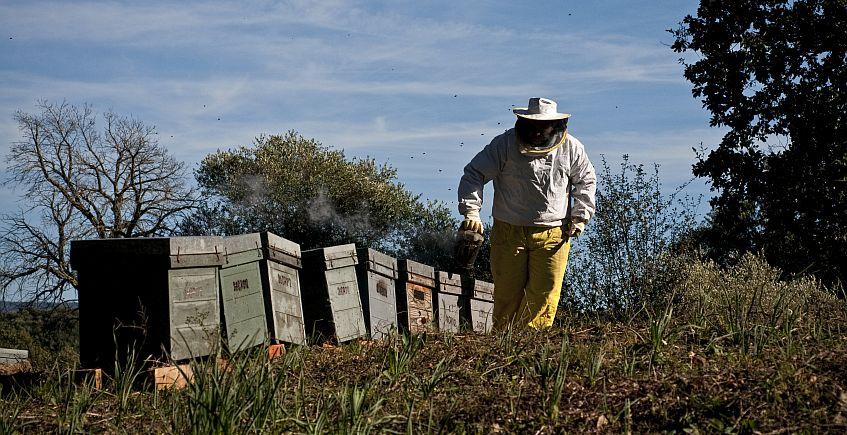 Las abejas de Prado del Rey vuelan alto