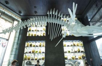 El esqueleto de una ballena preside el establecimiento. Foto: Cedida por el hotel Urban