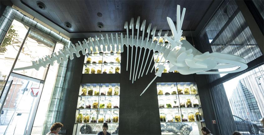 Glass, el bar de la ballena