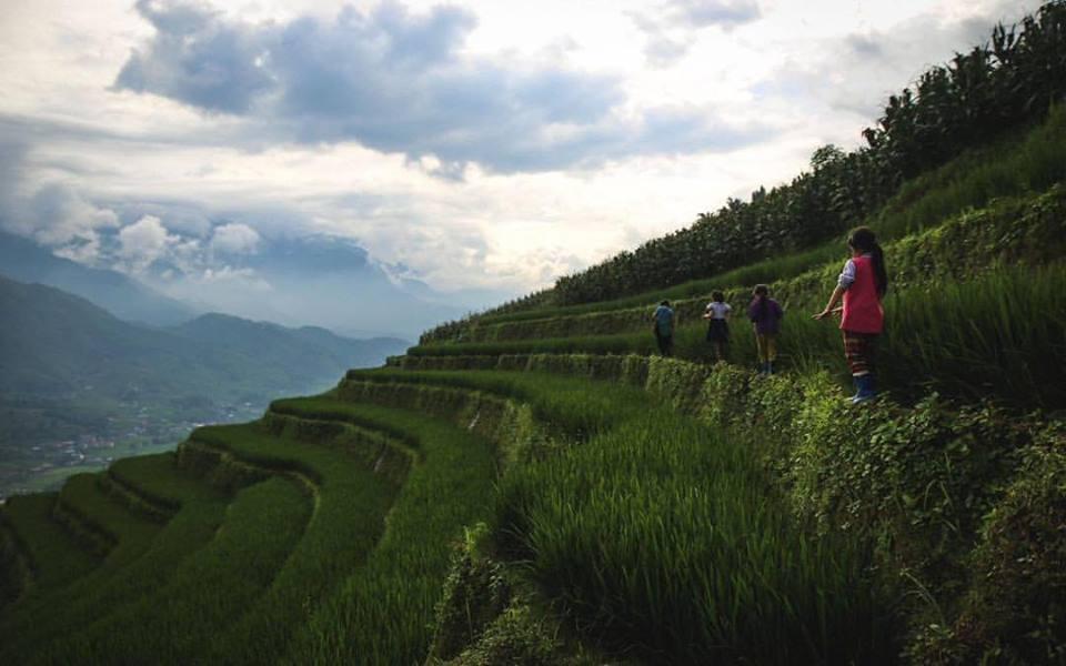 Los bancales de arroz de los Mon.