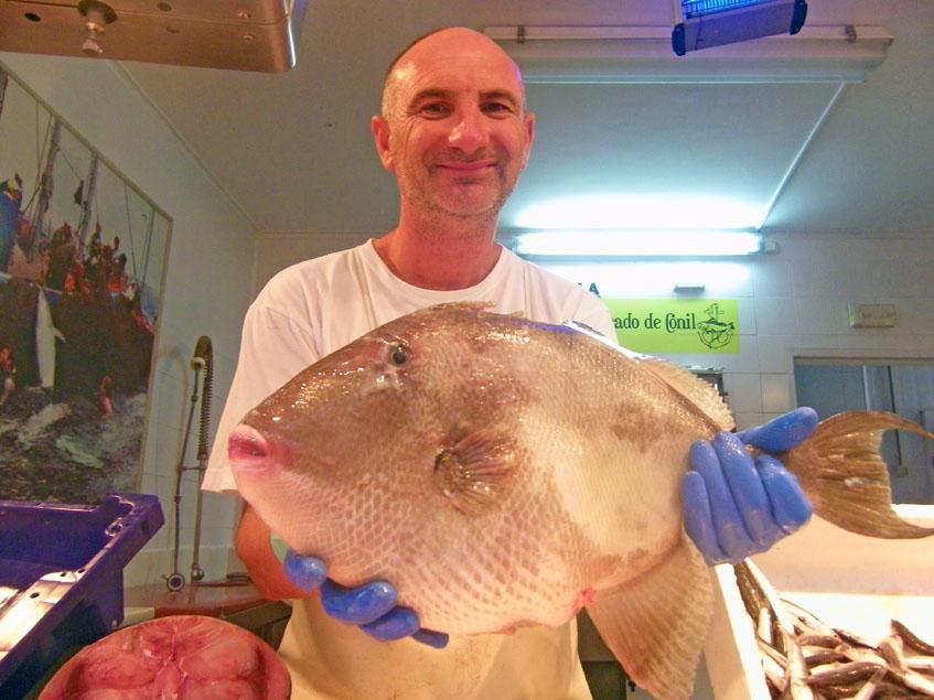 Miguel Aragón, que regenta la pescadería Aragón, en el mercado de abastos de Conil, con un ejemplar de pez cochino. La pescadería surte a la Venta Melchor. Foto: Cosasdecome