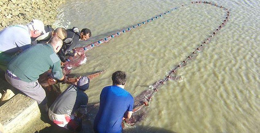 El pescado de estero en 10 minutos