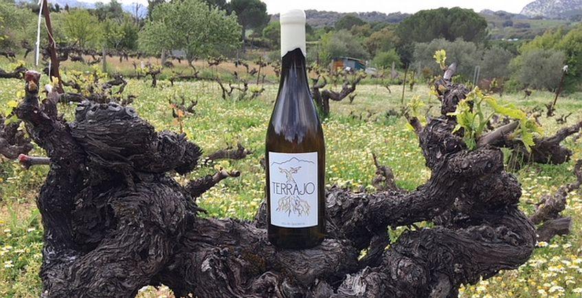 El vino blanco surgido desde los altos viñedos de Grazalema