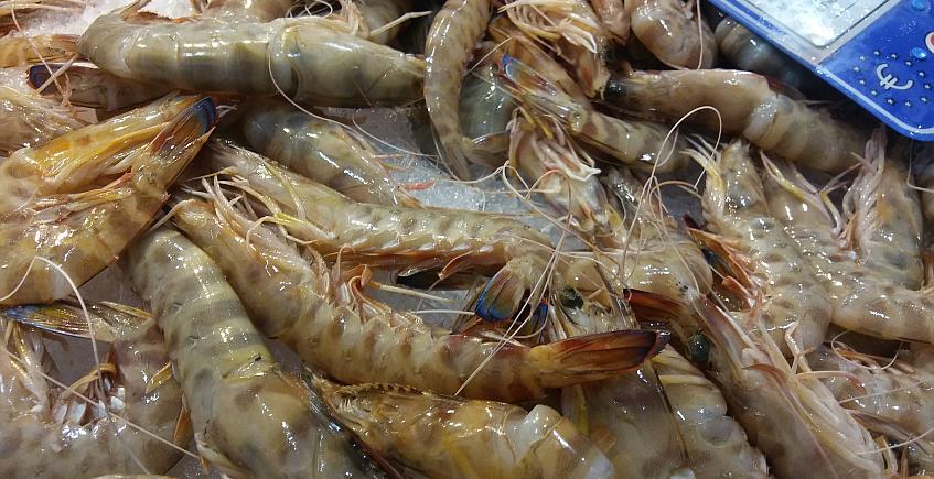Sanlúcar quiere ser la próxima Capital Gastronómica de España