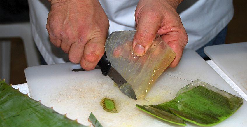 Los Borriquetes y Cuarto y Mitá demostrarán cómo se cocina el aloe en un Congreso Europeo