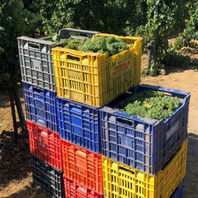 Cajas apiladas en la viña chiclanera.