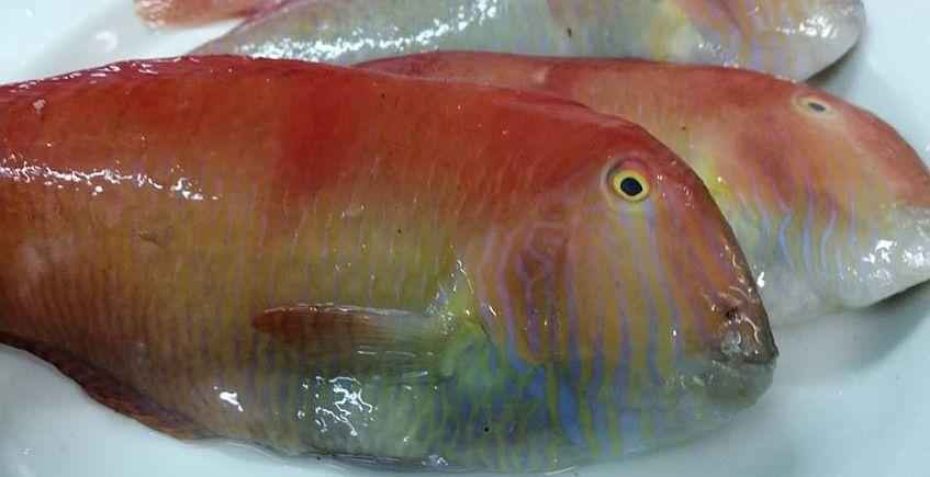 Un pescado de piel sabrosa y textura de acedía