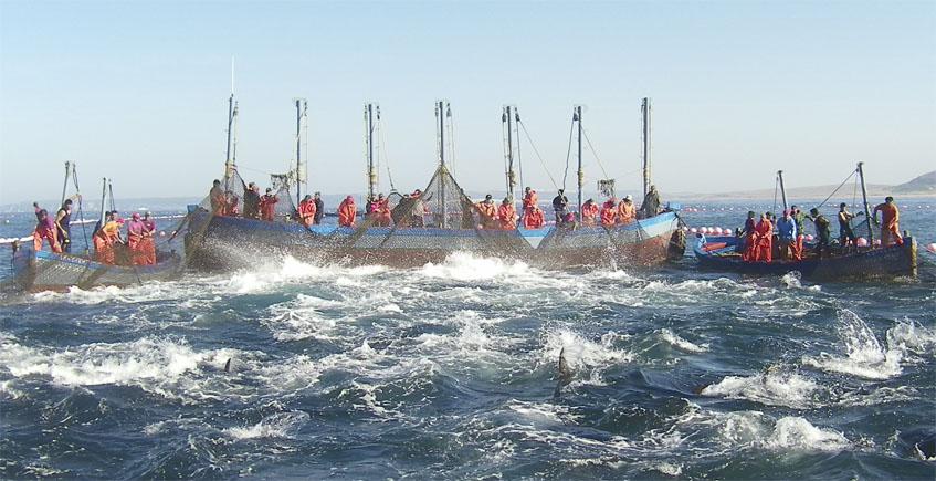 El programa de televisión Master Chef emite el domingo un programa dedicado al atún de almadraba