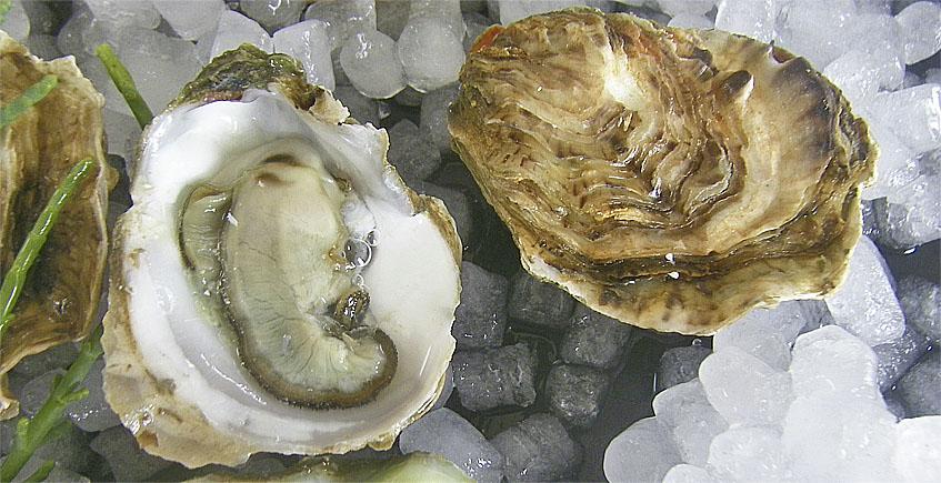 Las ostras rizadas de Cádiz, en las conservas del Abuelo Paquiqui
