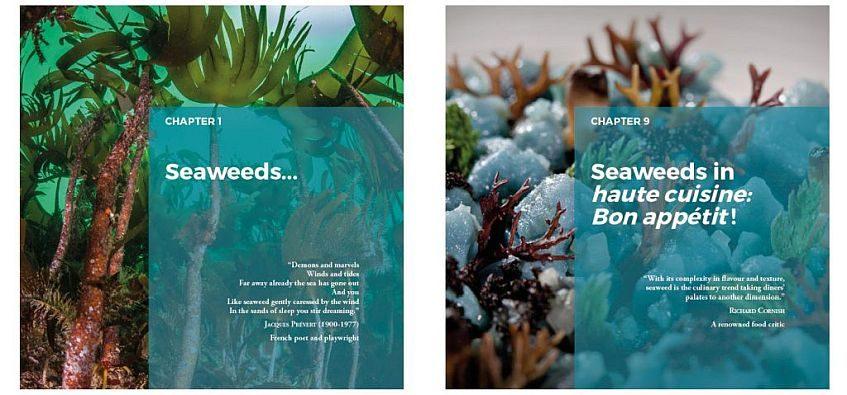 Premio para la traducción del libro ¿Las algas se comen?