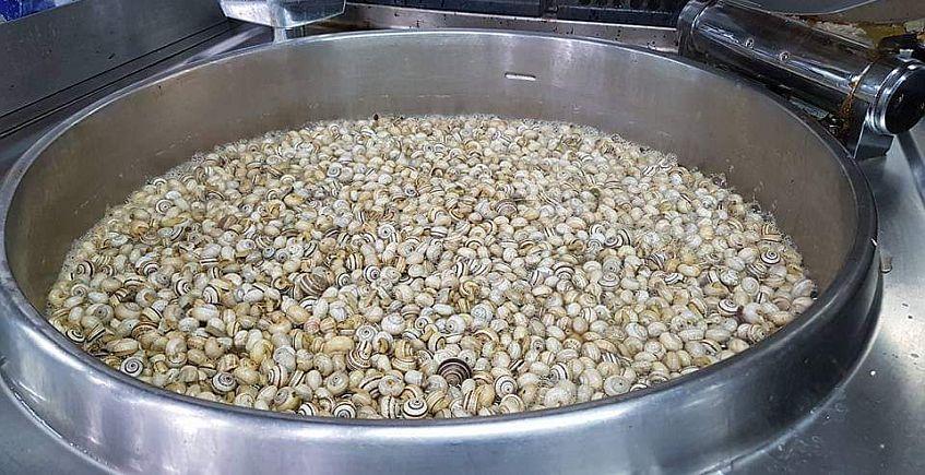 La Mar de Fresquita inicia su temporada de caracoles en 12 de abril