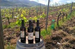 Los nuevos vinos de la Sierra