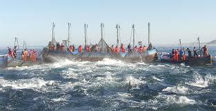 Desde el 10 de mayo. Cádiz. Jornadas de atún rojo en La Marea