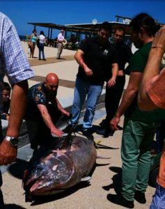 El atún, llegando a uno de los chiringuitos del grupo.