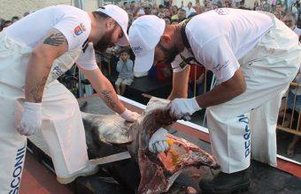 Ronqueo de atún y demostración de cocina el 1 de junio en Rota