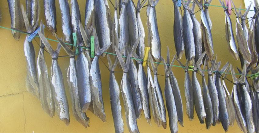 El pescado que se tiende